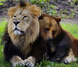 Lion-and-Bear-Photo-300x259.jpg