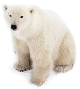Polar Bears Aren't The Only Ones Concerned With Green IT
